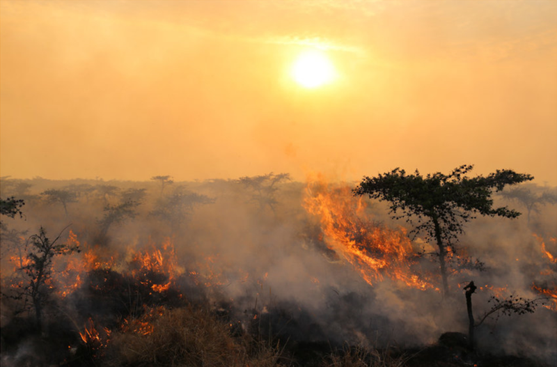 African wildfires screenshot.png